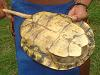 [Thumbnail: Turtle's shell used as a drum by the Embera people]