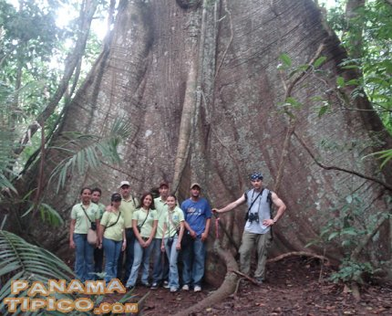 [A big ceiba tree (Ceiba pentandra) is one of the main attractions of the island.]