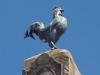 [Thumbnail: A rooster stands on top of the obelisk at France Square.]