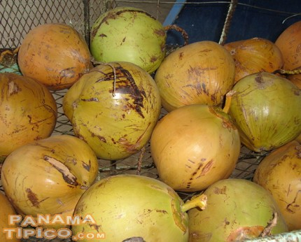 [A group of young coconuts ready for sale]
