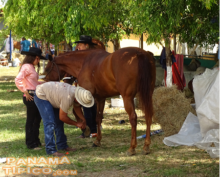 [Horse riding and equine show are also important events held during the fair.]