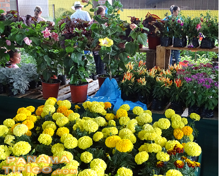 [Flowers, as one of the main products of the Chiriqui province, are always present at the David Fair.]