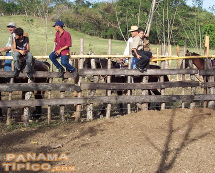 [At one end of the track, the cowboys wait for their turn to perform.]